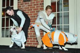 Bulldogs Sophia and Henry star as Princess Leia and Luke Skywalker. (Shannon Finney Photography)