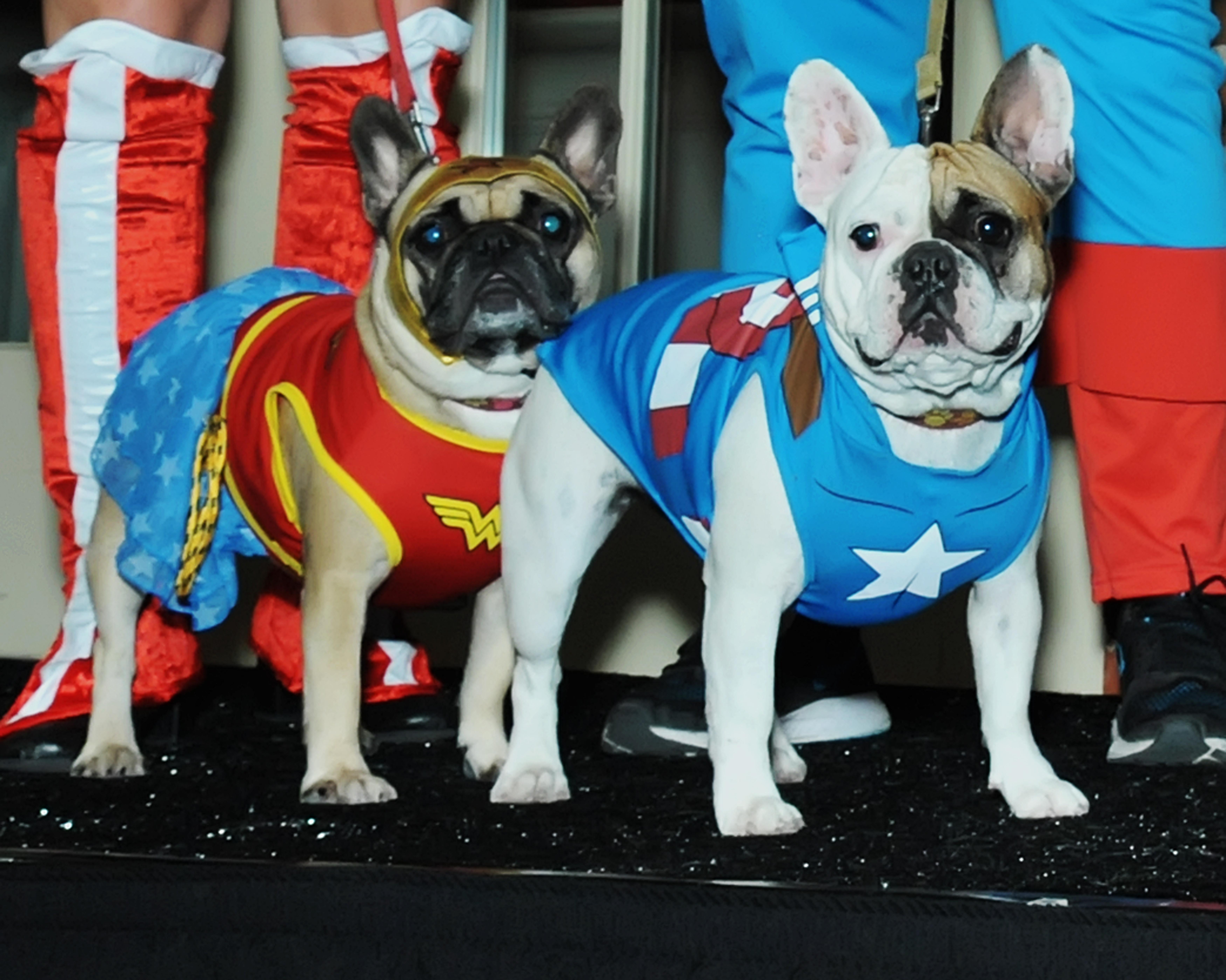 Dogs get in costume, Halloween spirit to benefit welfare league (Photos)