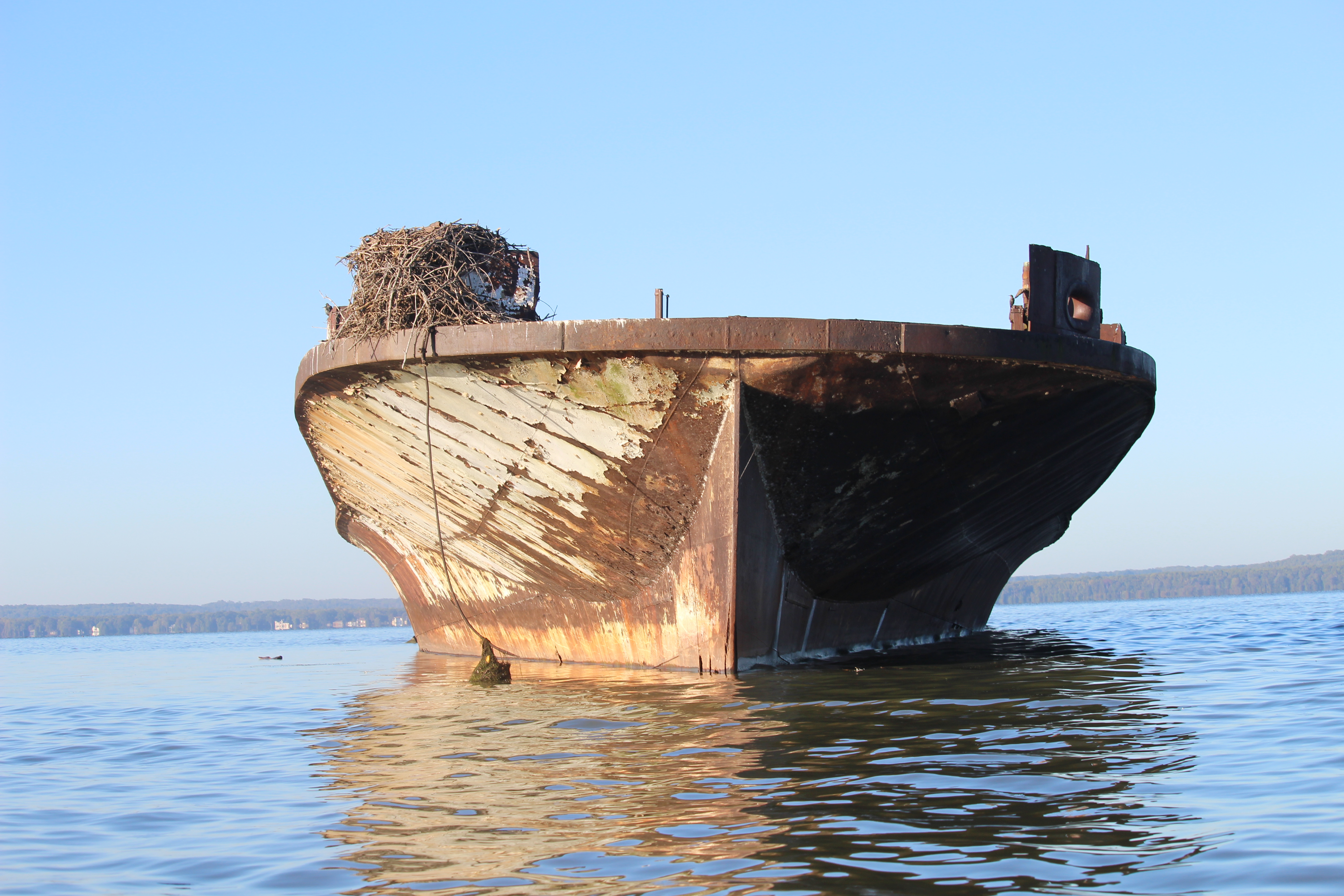 'Ghost fleet' offers treasure trove of wildlife, history in the Potomac (Photos)