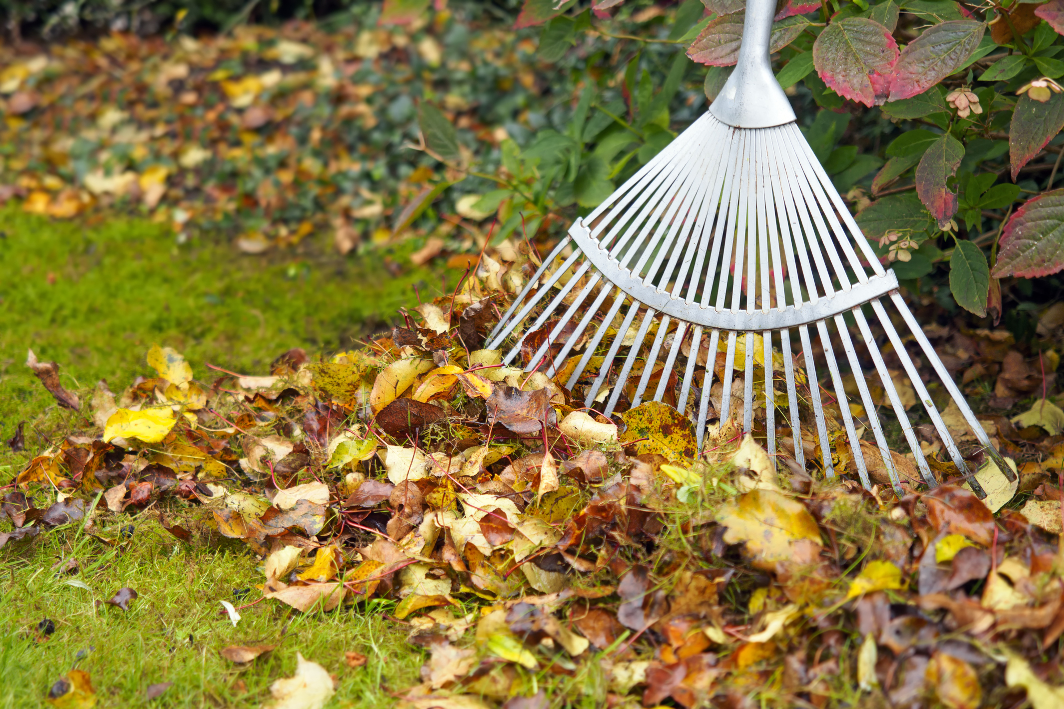 How to put fallen leaves to work for your lawn, garden