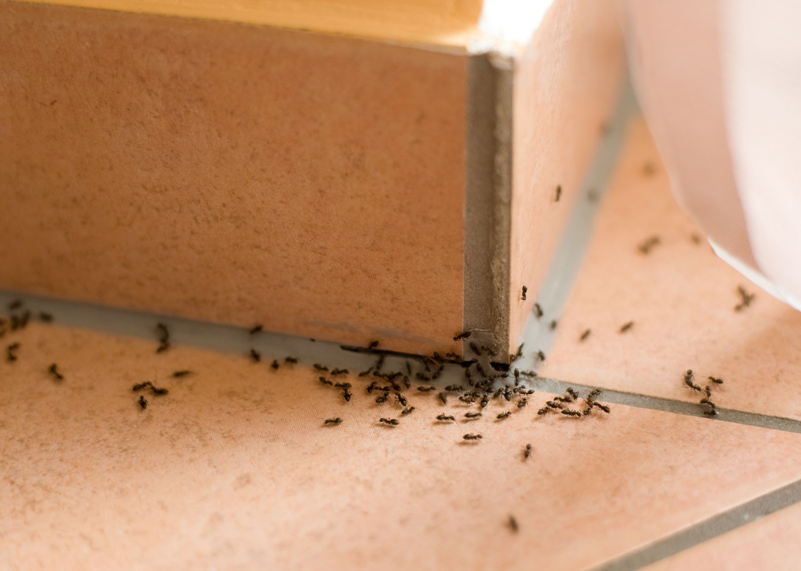 Tips to keep ants out of your nest this fall