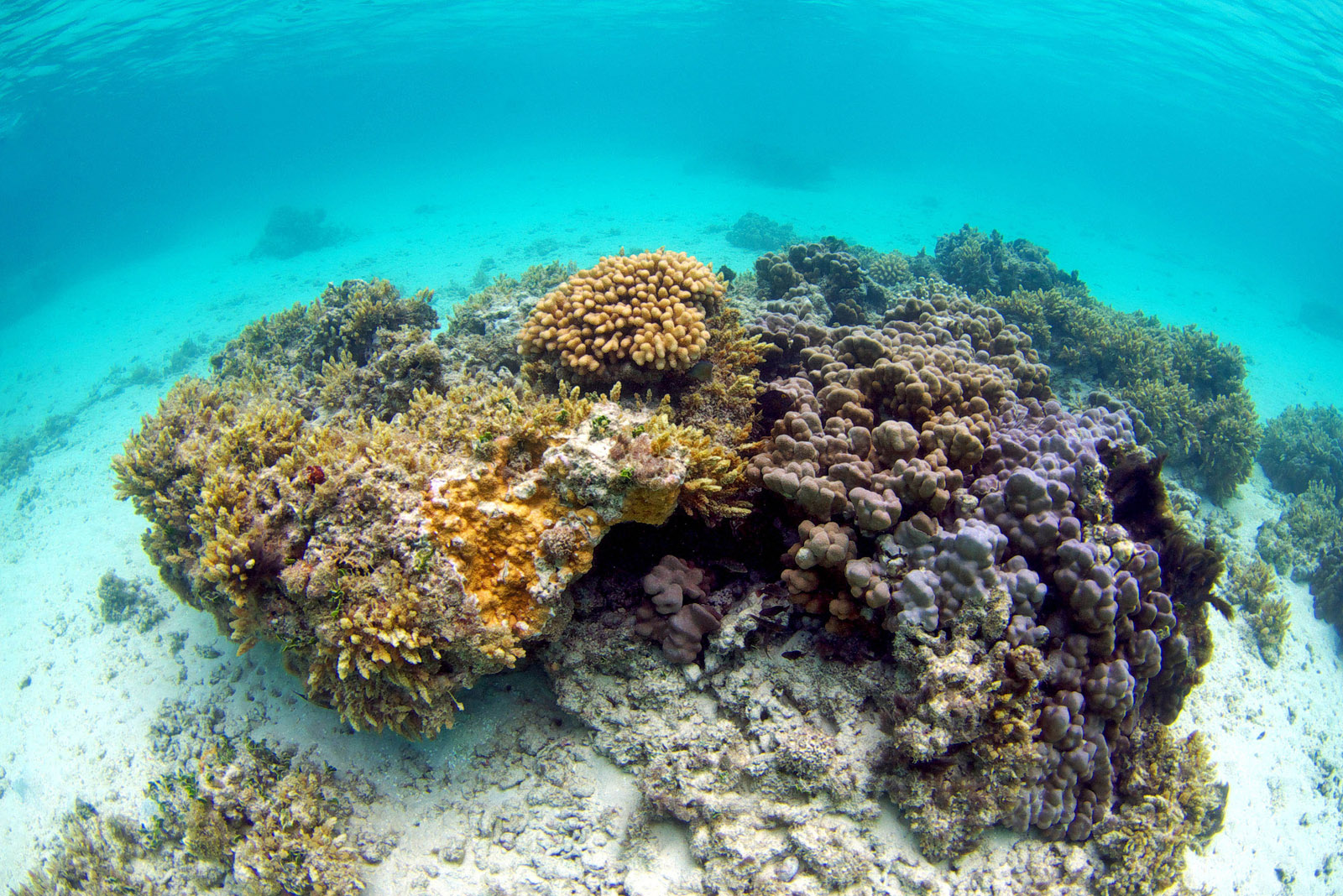 Study: Some sunscreens could be killing coral reefs