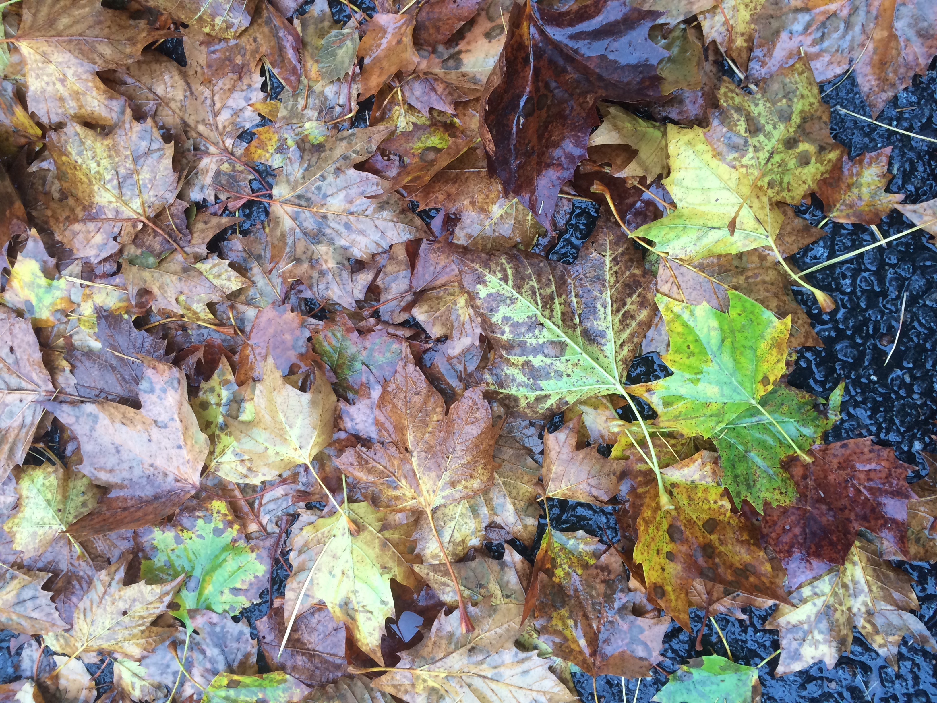 Autumn leaves: Rich, warm colors hang on through wind, rain