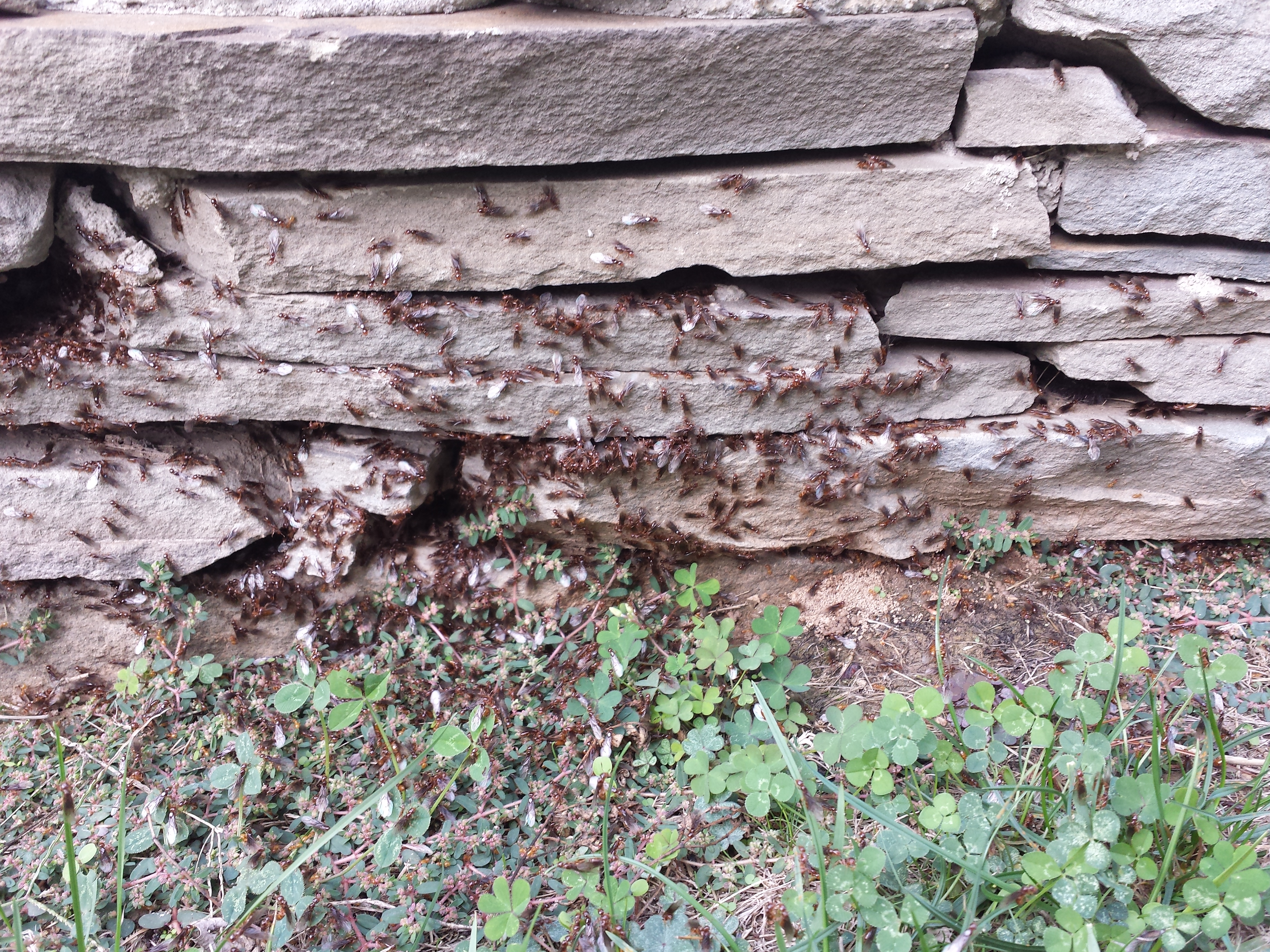 Garden Plot: Cold nights, termites and last-minute lawns