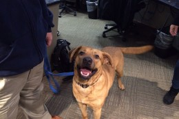 Forrest came to the Washington Animal Rescue League from South Carolina after the recent flooding. (WTOP News)