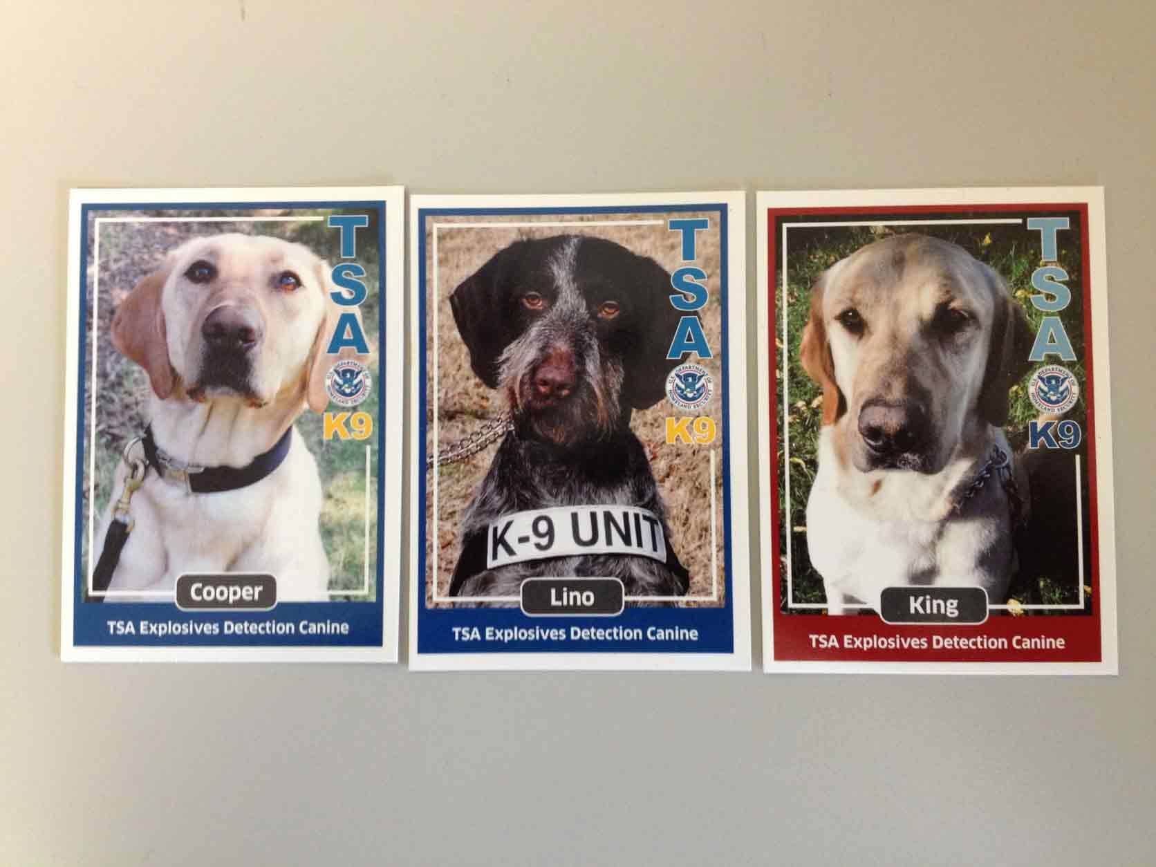 Bomb Dogs For Adoption