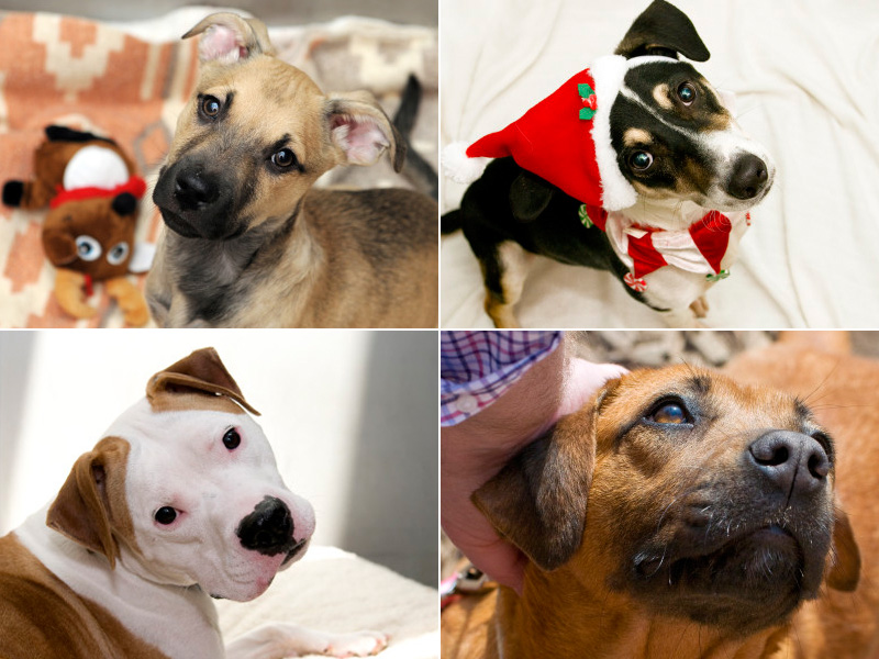 2015 Pets of the Week: Where are they now?