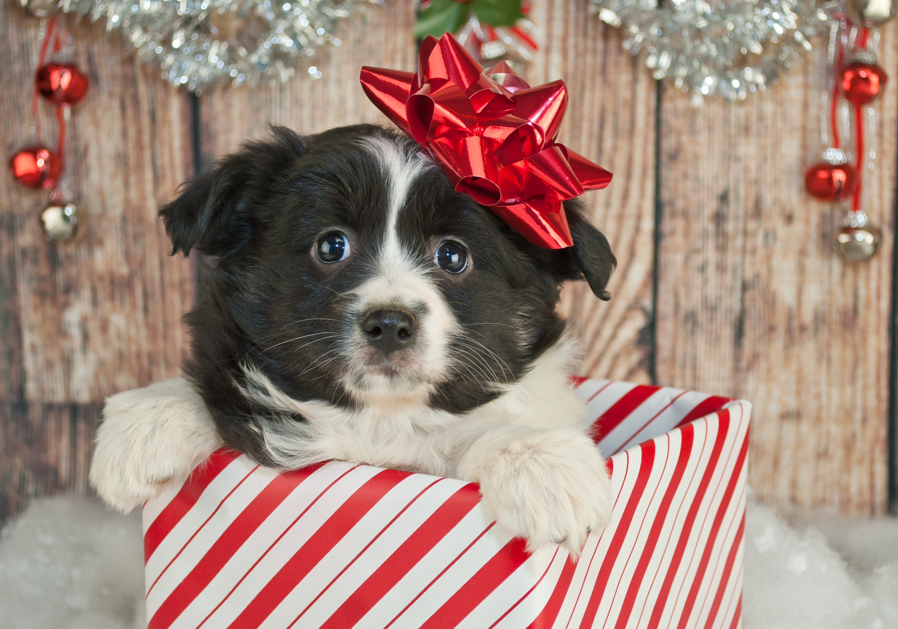 Friend Dogs Present