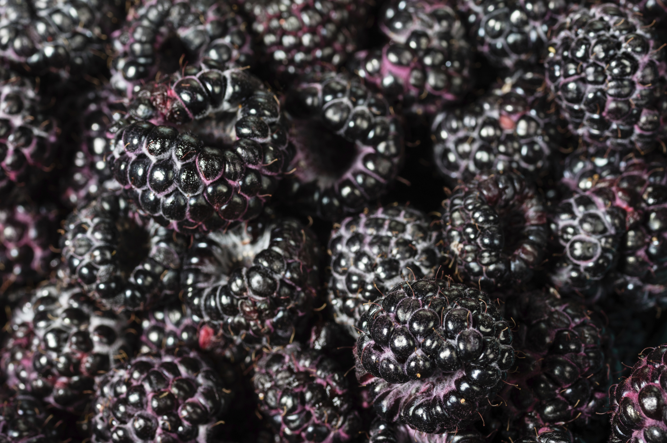Research: Black raspberries high in anti-oxidants, but more may not mean better