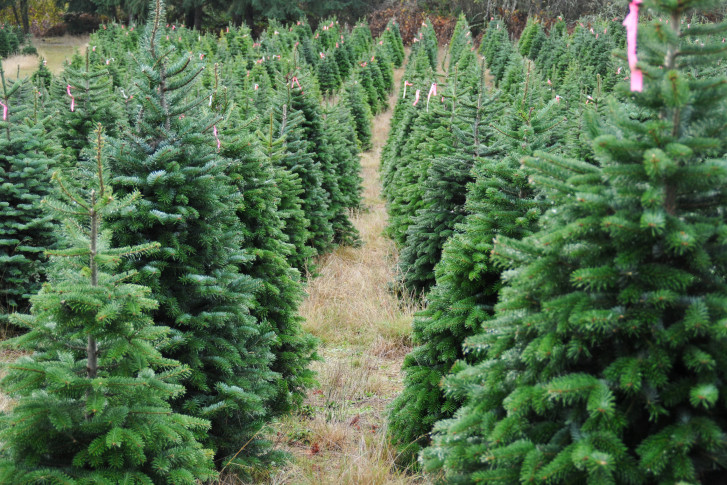 Garden Plot Editor Mike Mcgrath Returns With A Holiday Themed Column Thinkstock