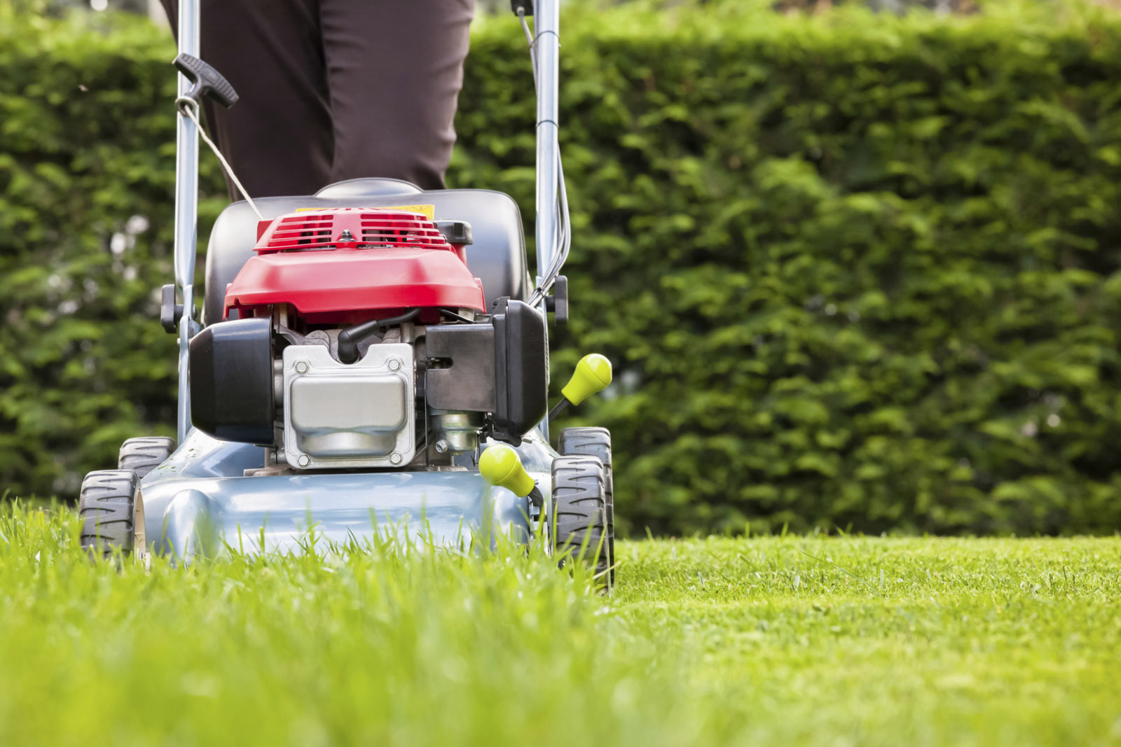 Resolve to maintain a healthy lawn in 2016