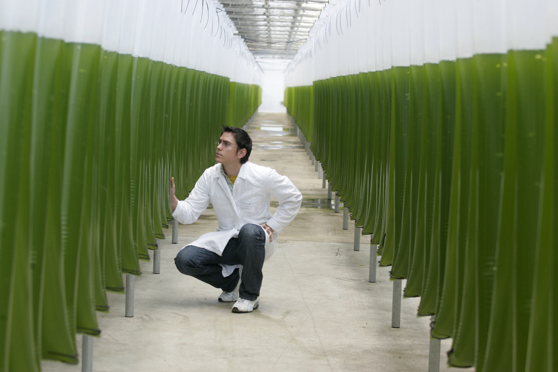 Food and health experts are dubbing algae the nation's next big superfood.