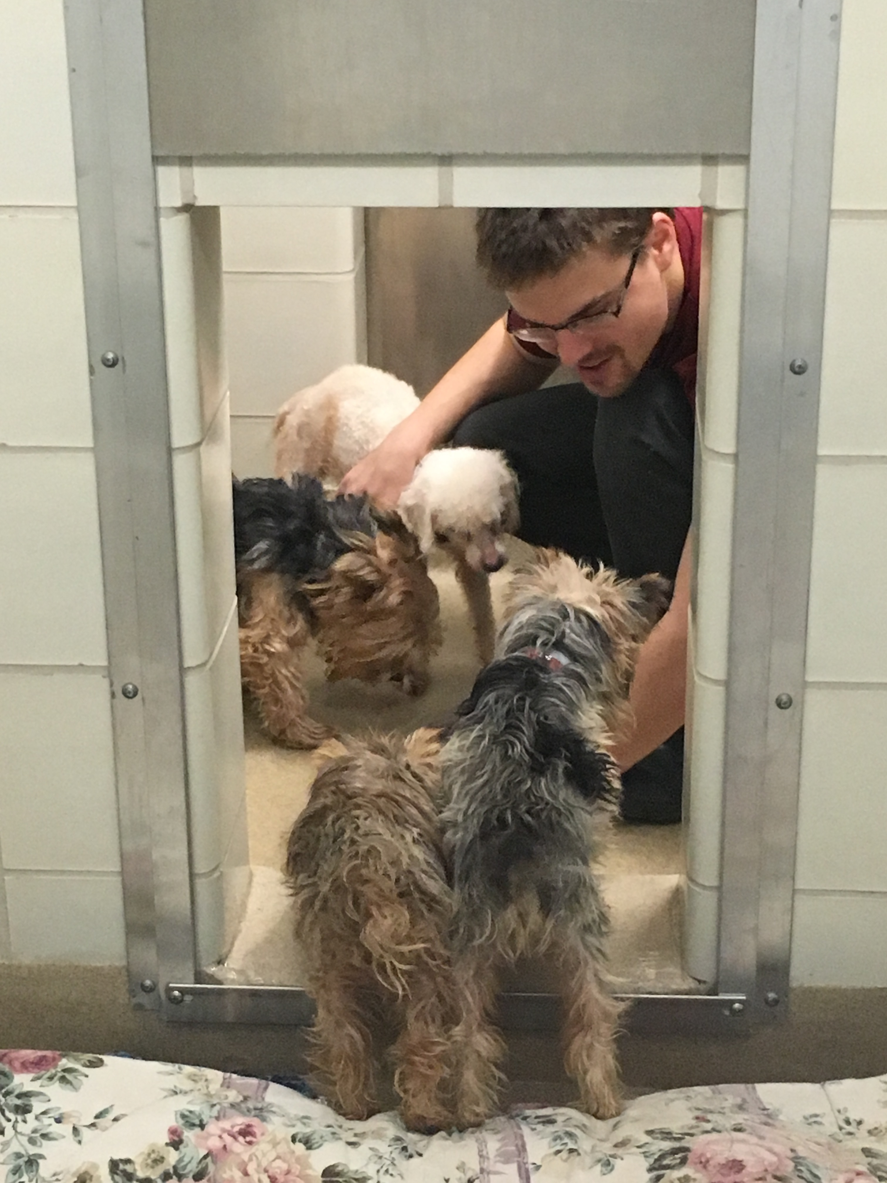 Dogs seized from Rockville home prepared for adoption (Video)