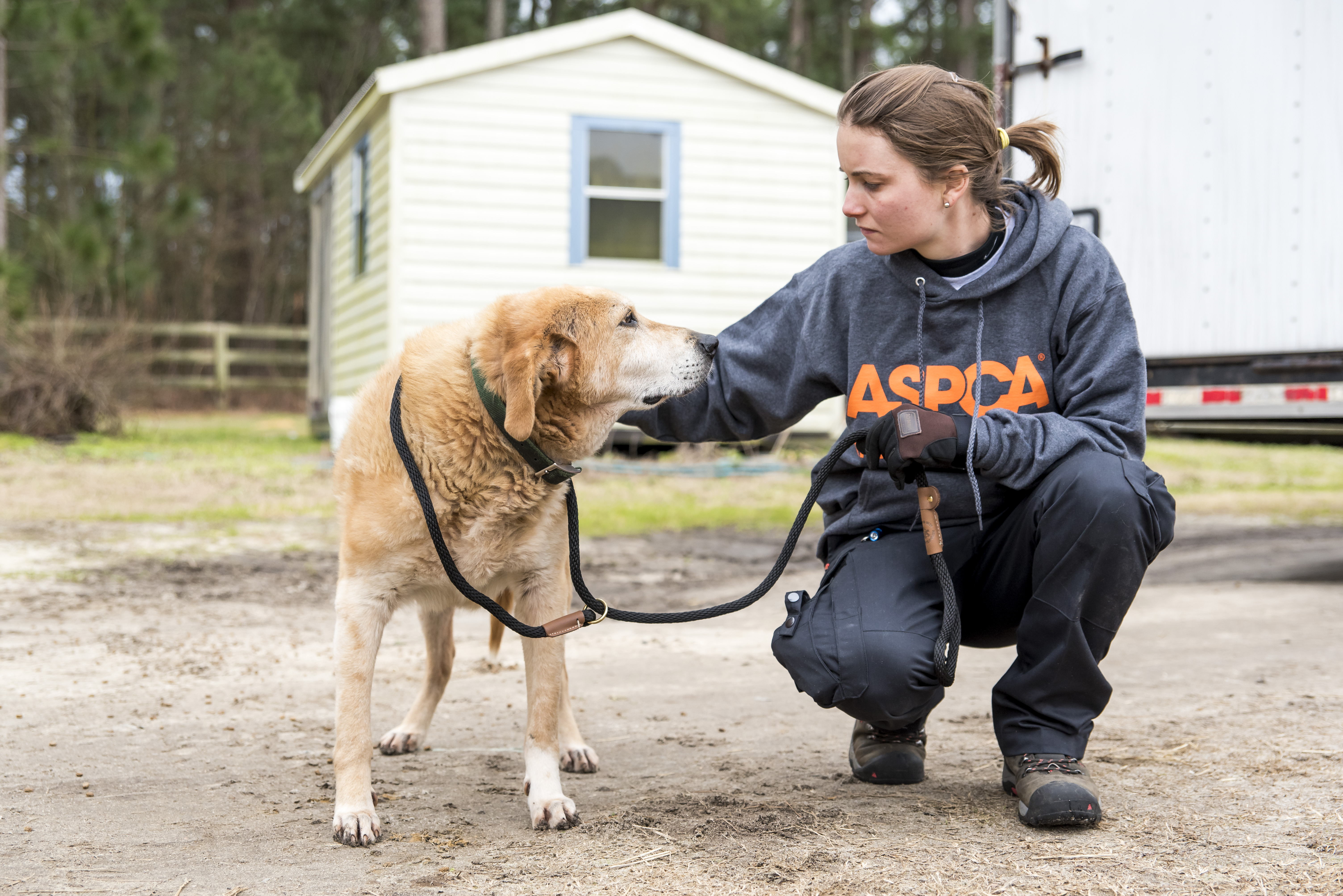 Evaluating rescue groups: How do you choose?