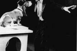 American rock singer Elvis Presley (1935 - 1977) serenades a basset hound in a top hat with the song, 'Hound Dog' on the set of 'The Steve Allen Show,' July 1956. (Photo by NBC Television/Getty Images)