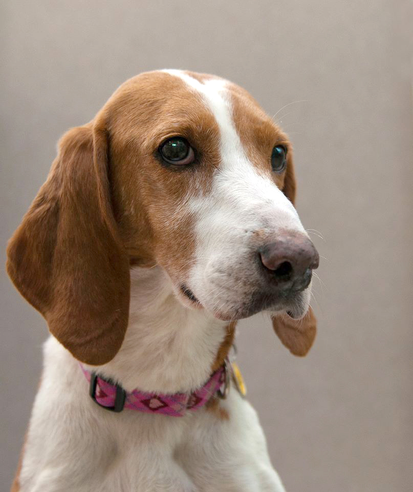 Are you looking for a sweet, loving, loyal canine companion? If so, then look no further than Juliet. (Courtesy WARL)