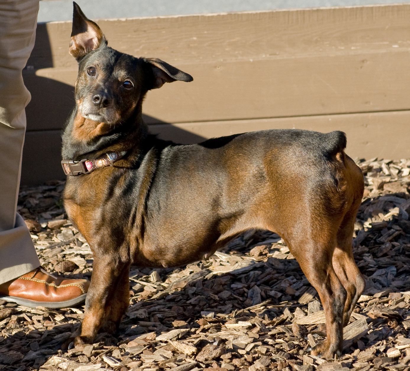 Ladybird is available for adoption at the Washington Animal Rescue League. (Courtesy WARL)