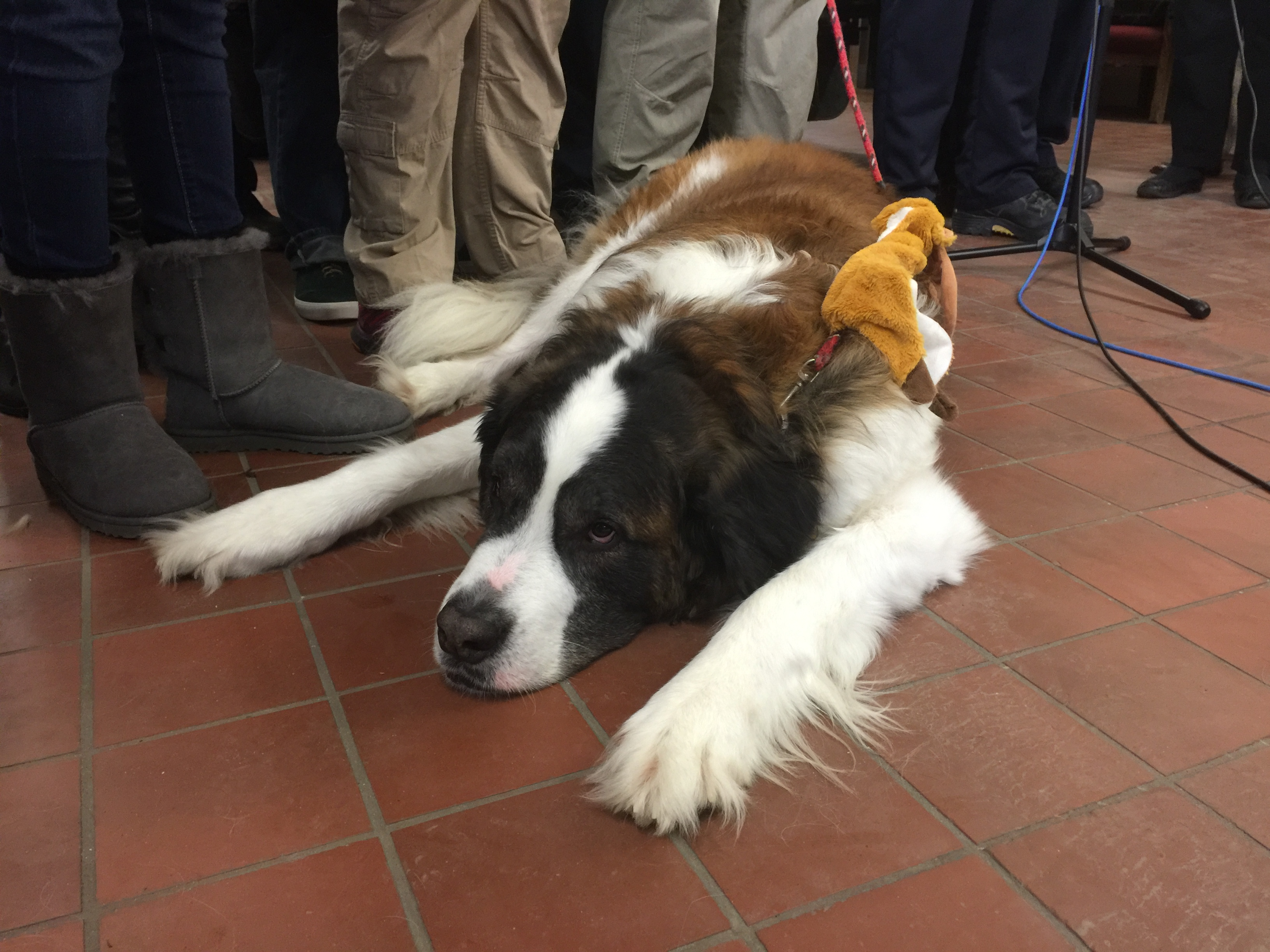 Fairfax dog rescued after falling through ice during blizzard