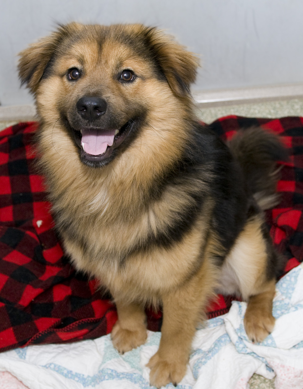 At first glance, Walnut looks like an oversized stuffed animal; perhaps a Teddy bear come to life. In reality, this handsome boy is a 1.5-year-old Chow mix who can't wait for a forever home of his own! Walnut is pretty much the perfect dog: friendly with people and dogs, playful, and very affectionate. He'll happily share his toys with you and then dive into your lap for some snuggling. He's looking for a human companion who will love him, take him for walks…and brush his coat regularly. (Let's face it, that gorgeous coat, like a great hairstyle, doesn't just maintain itself.) If you're looking for a great dog to share your life, stop by the Washington Humane Society-Washington Animal Rescue League shelter at 71 Oglethorpe Street, NW, and meet Walnut today! (Courtesy WARL)
