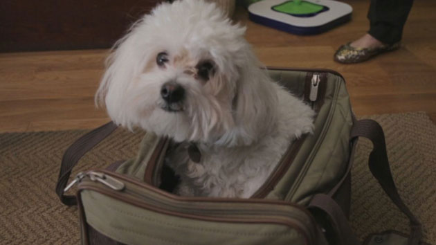 Dogs take medication to help with separation anxiety