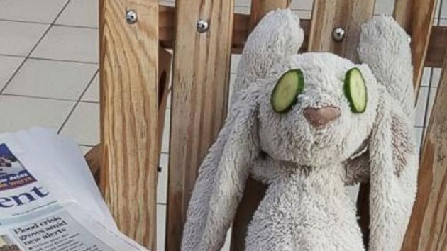Ireland hotel gives stuffed bunny the stay of a lifetime