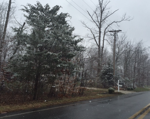 Snow falls on the trees in Waldorf, Maryland, on Sunday, Jan. 17, 2016. (Darci Marchese/WTOP)