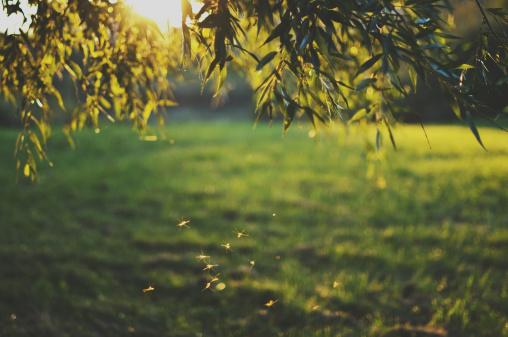Garden Plot: Let's talk mosquito prevention