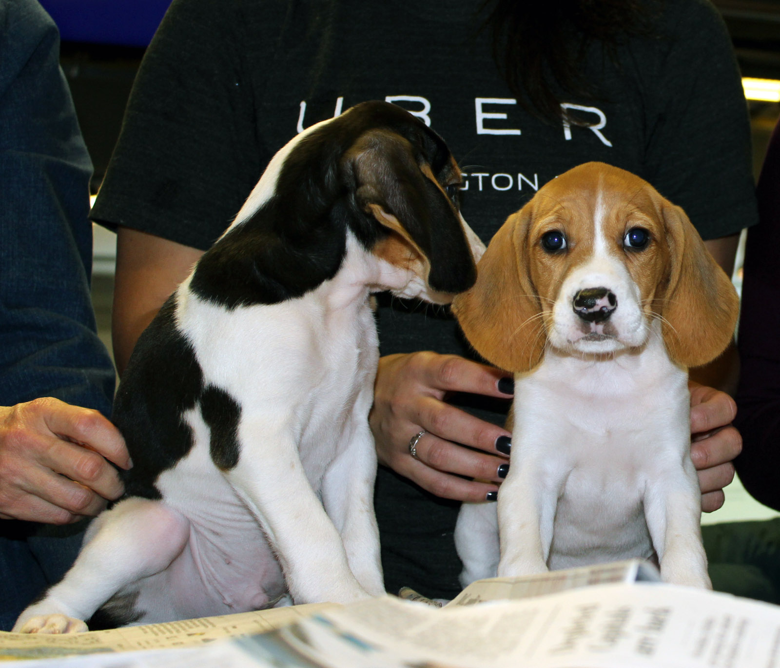 Uber to deliver puppies Wednesday to benefit D.C. shelter