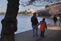 With the Jefferson Memorial in the background, bundled up families walk past cherry blossom trees along the tidal basin in Washington, Monday, March 21, 2016. The trees are expected to hit peak bloom later this week, despite current cold temperatures, according to the National Park Service. (AP Photo/Jacquelyn Martin)