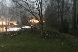 Tree damaged during the Feb. 24, 2016 storm in Burke, Virginia. (Courtesy WTOP listener)