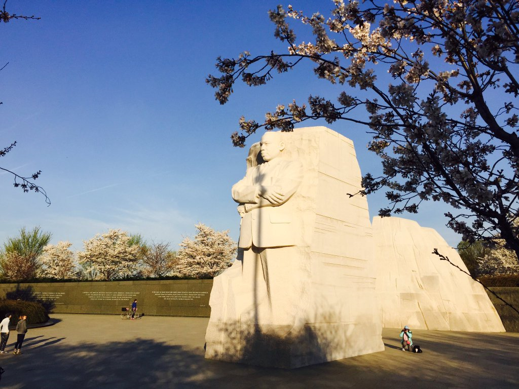 The cherry blossoms near the Martin Luther King Memorial on the morning of March 24, 2016. (Chris Pybing)