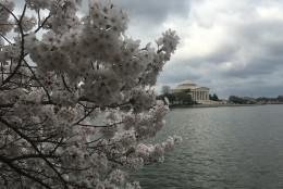 The view from the Tidal Basin shortly before 10 a.m. March 25, 2016. (WTOP/Rahul Bali)
