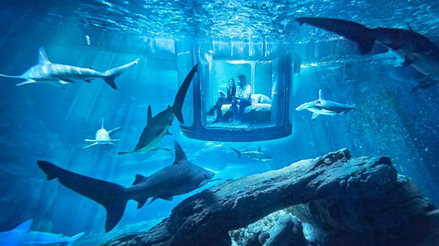 Shark tank Airbnb bedroom lets you sleep with the fishes — literally
