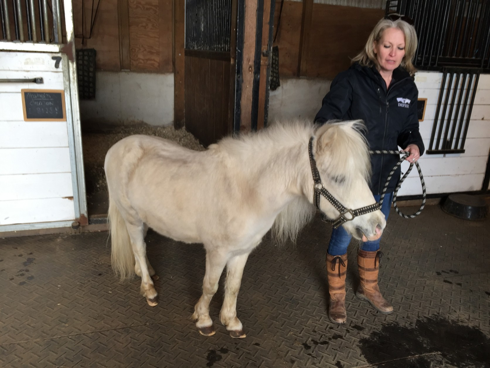 DeEtte Hillman of Days End Farm Horse Rescue with Rio. The horse is recovering well from 11 or 12 years of hoof neglect. (WTOP/Michelle Basch)