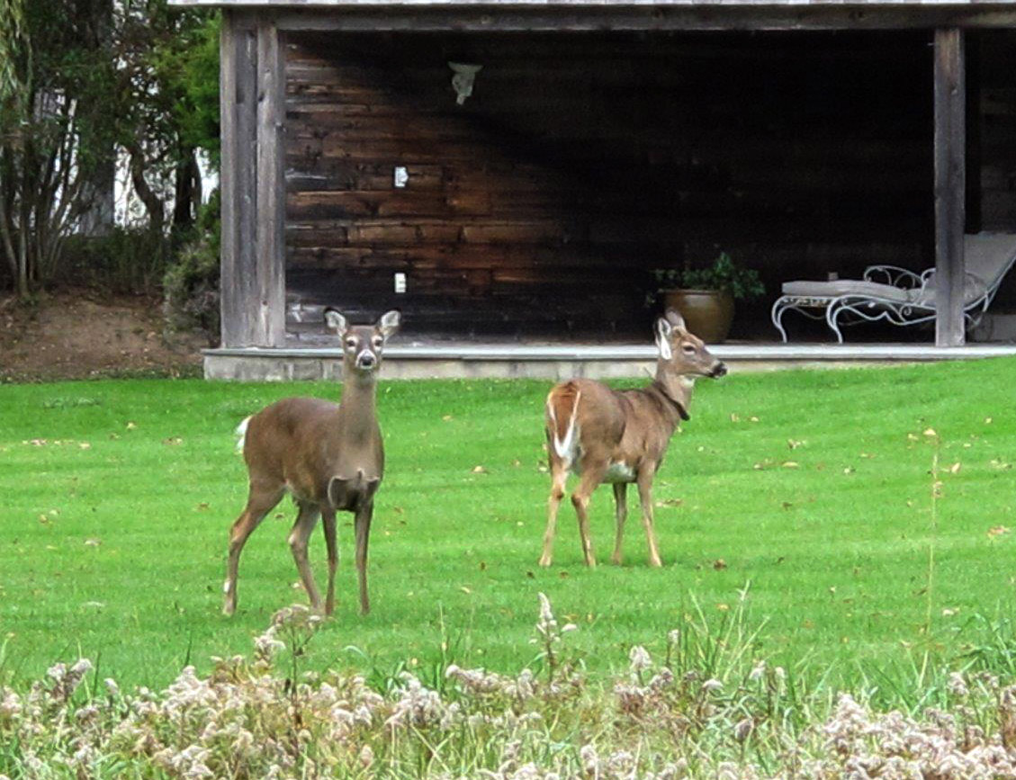 Tips and tricks to keep deer, bugs and crab grass at bay