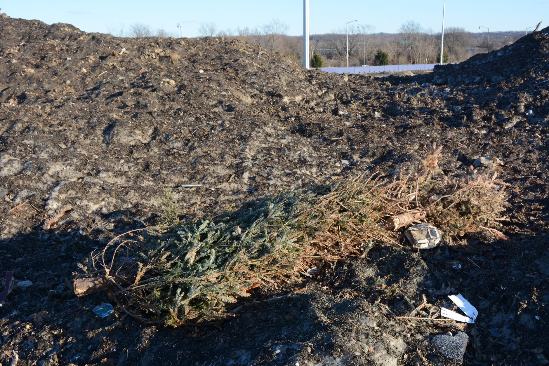 Christmas trees are the most common forms of debris in Lot 7. (WTOP/Dave Dildine)