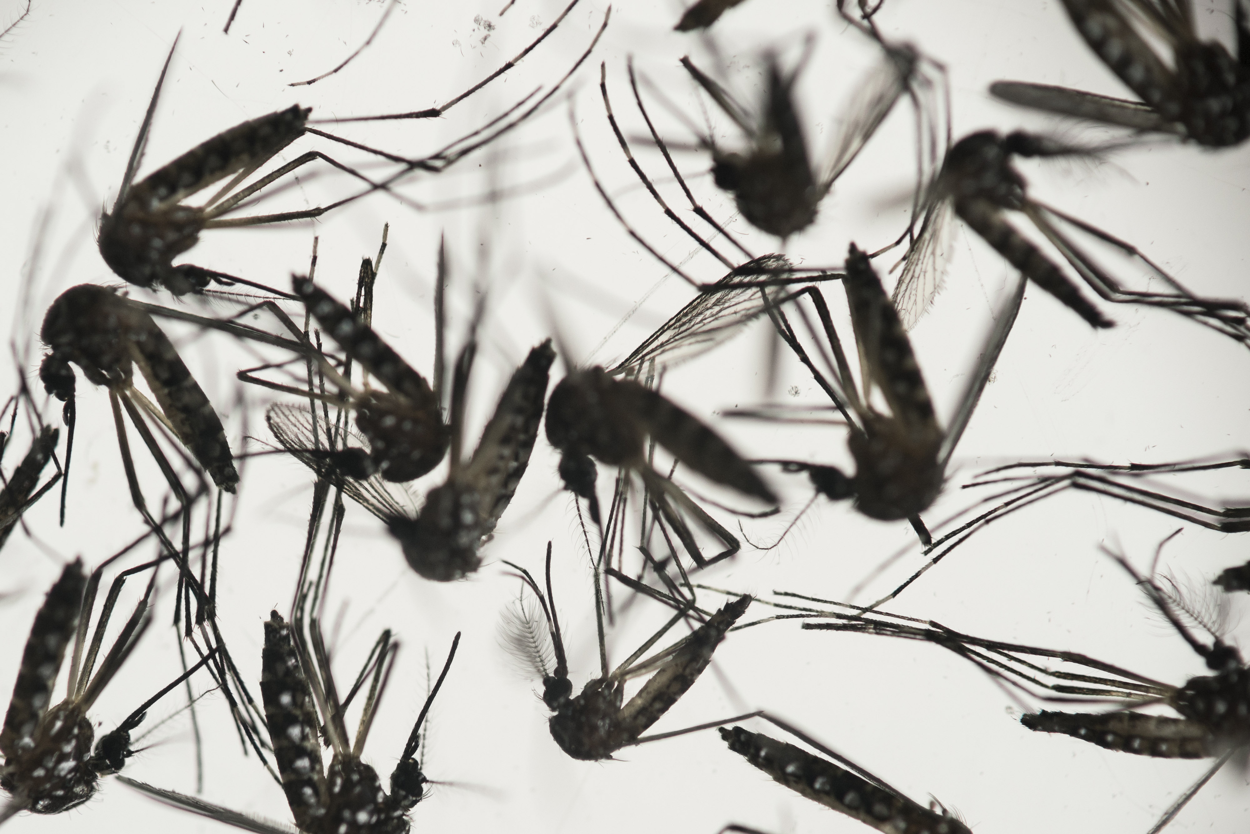 As summer nears, officials warn to protect against Zika virus