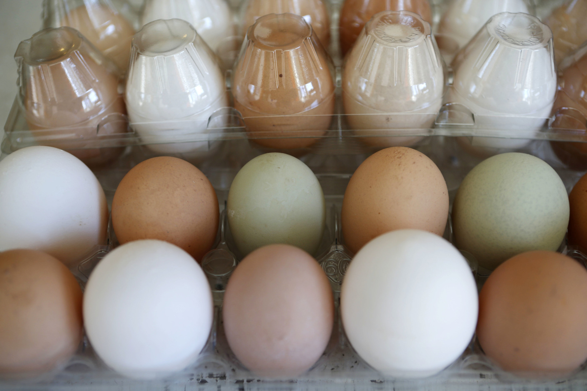 """In this Friday, April 15, 2016 photo, fresh eggs are packaged for sale at the Quill's End Farm, a small family run operation in Penobscot, Maine. Supporters of an unsuccessful attempt to amend Maine's constitution to ensure a """"right to food"""" say the defeat is only a bump in the road for advocates of food freedom around the country. (AP Photo/Robert F. Bukaty)"""