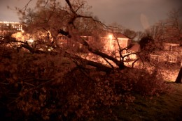 A downed maple tree in Fort Reno Park in Northwest D.C. (WTOP/Dave Dildine)