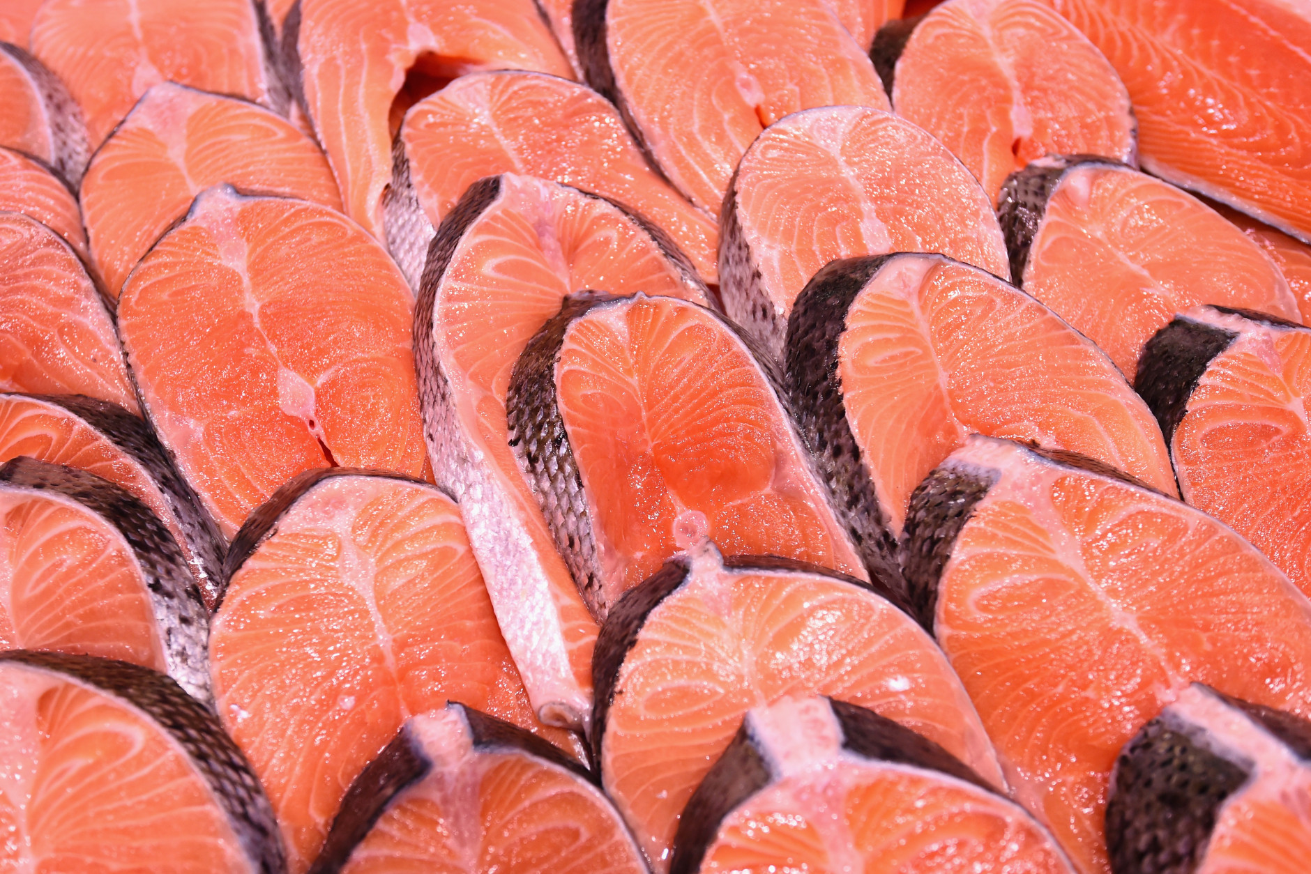 Rows of salmon steaks