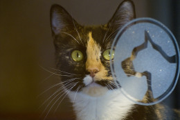 Bebe is a playful girl who enjoys toys and, unlike some cats, she can get along with friendly dogs. She is one of the many cats at the Washington Humane Society/Washington Animal Rescue League. (Courtesy WARL)