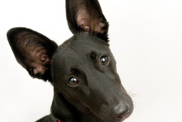 (Washington Humane Society/Washington Animal Rescue League )