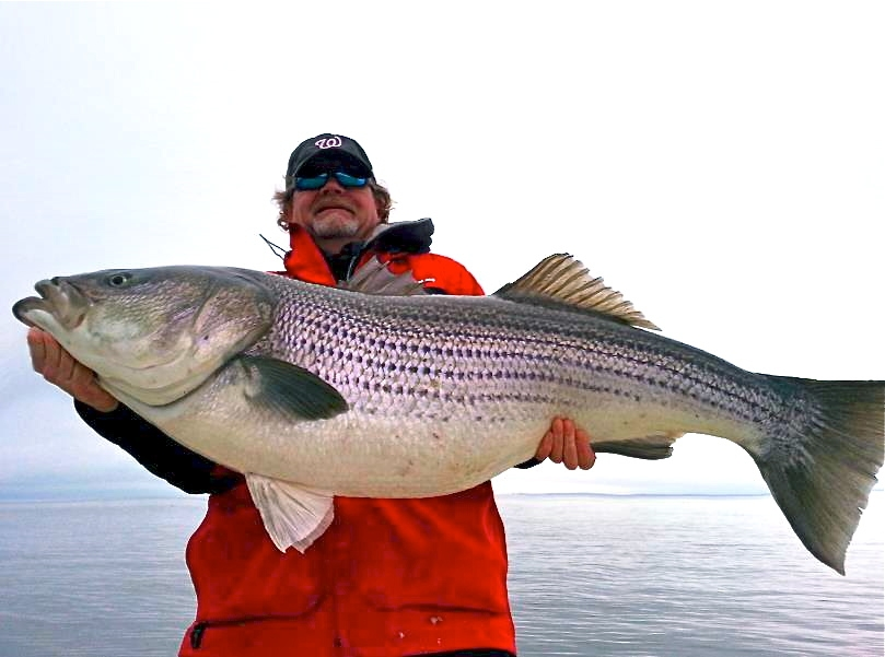 Maryland opens rockfish season with new regulations wtop for Fishing in md