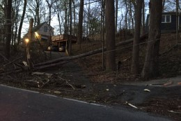 WTOP reporter Dennis Foley took photos of some of the overnight wind damage in Takoma Park, Maryland. A wind storm knocked down trees and left thousands without power overnight Saturday, April 2, 2016. (WTOP/Dennis Foley)