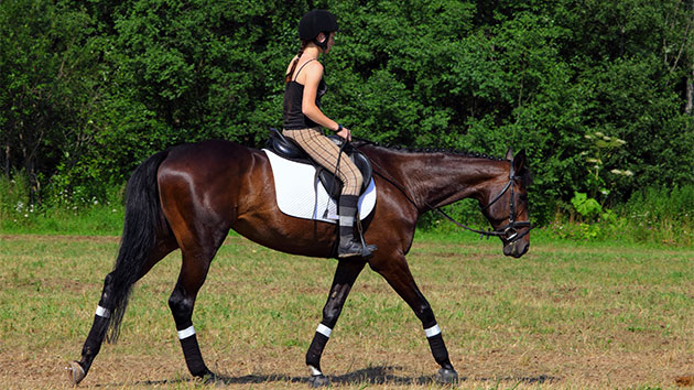 Horse riding leads causes of sport-related traumatic brain injuries, study says