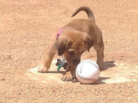 Daisy the puppy becomes newest member of Savannah baseball team
