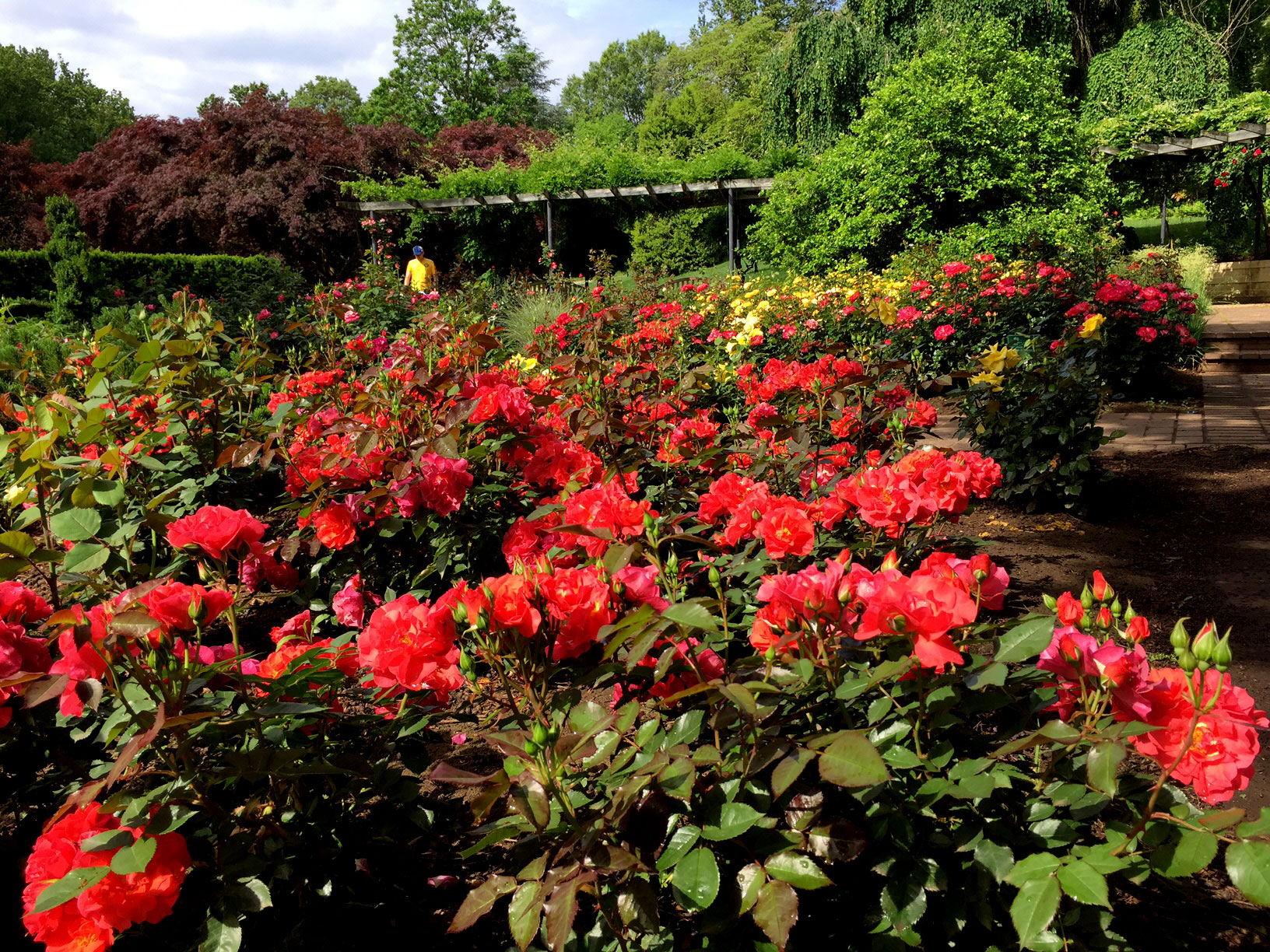 Photos Stopping To Smell The Roses At Brookside Gardens