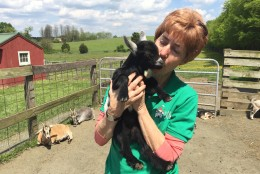 Martha Clark cuddles with the youngest goat on the farm. Hillary is only two weeks old! (WTOP/Michelle Basch)