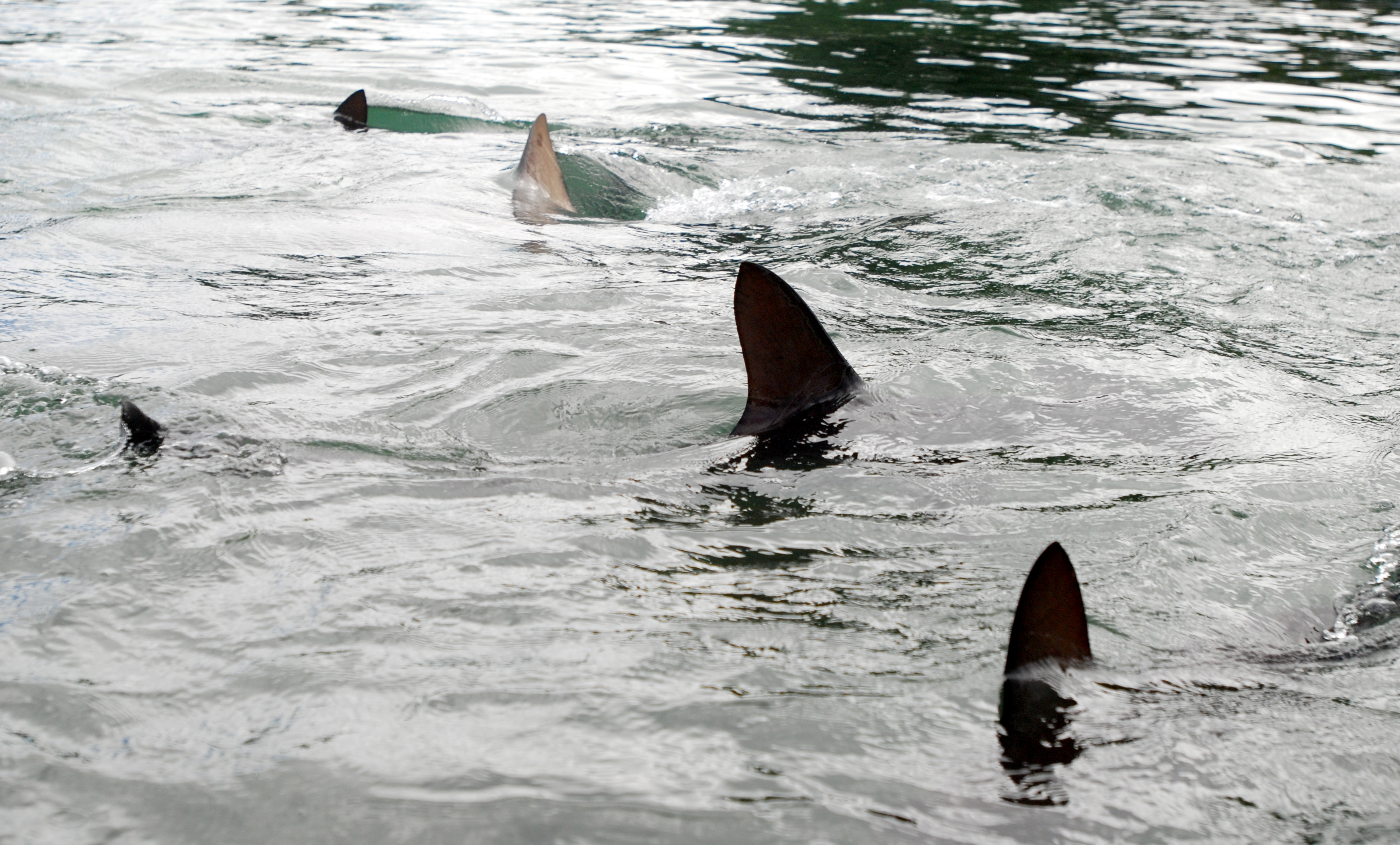 What to expect with shark attacks this summer