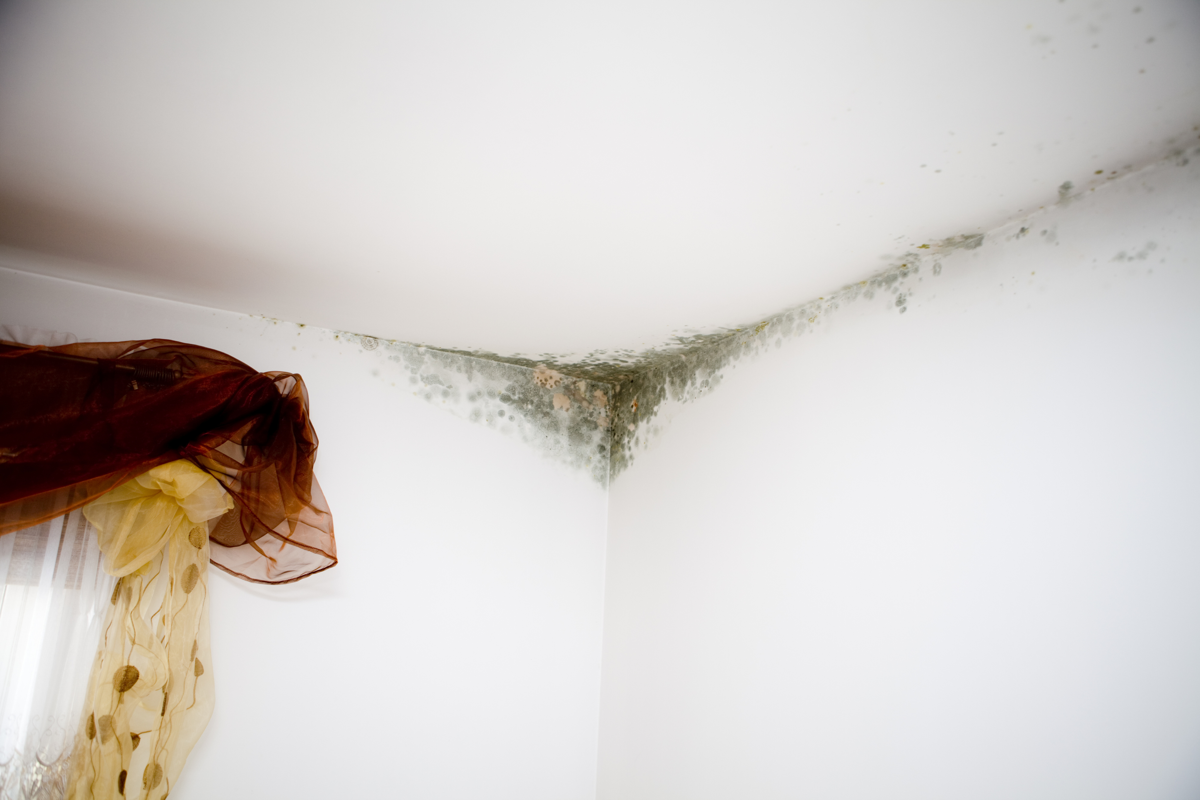 Tips for detecting and preventing mold in your house